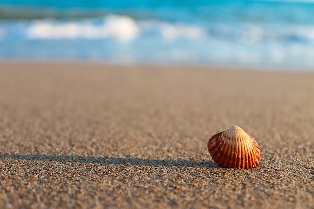 Seashell on the seashore on a sunny summer day