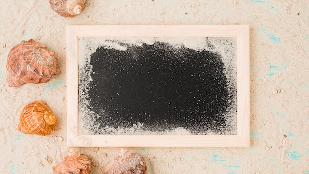 Seashells among sand near blackboard