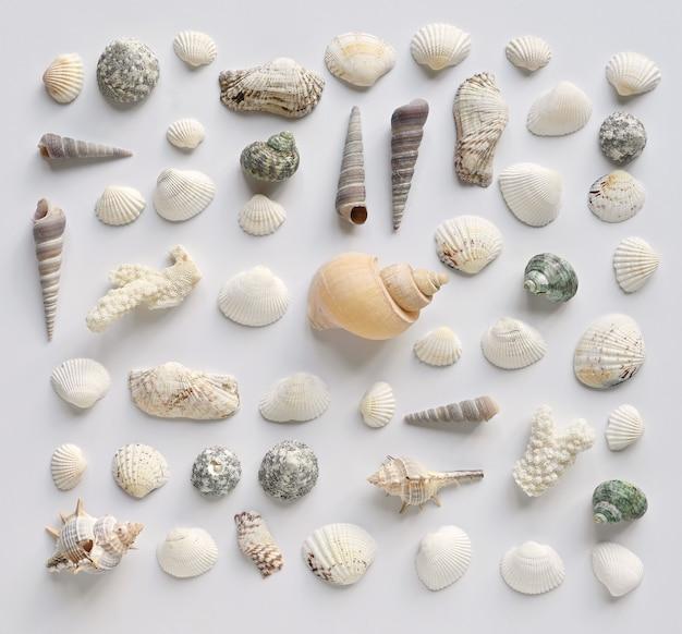 白い背景の上の貝殻とサンゴのコレクション