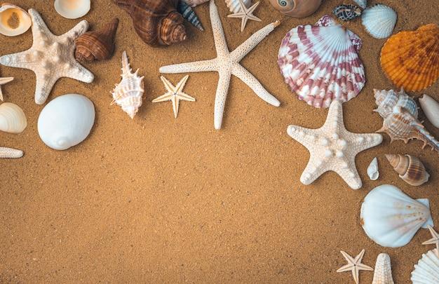 Морские ракушки и морские звезды обрамляют песчаный пляж