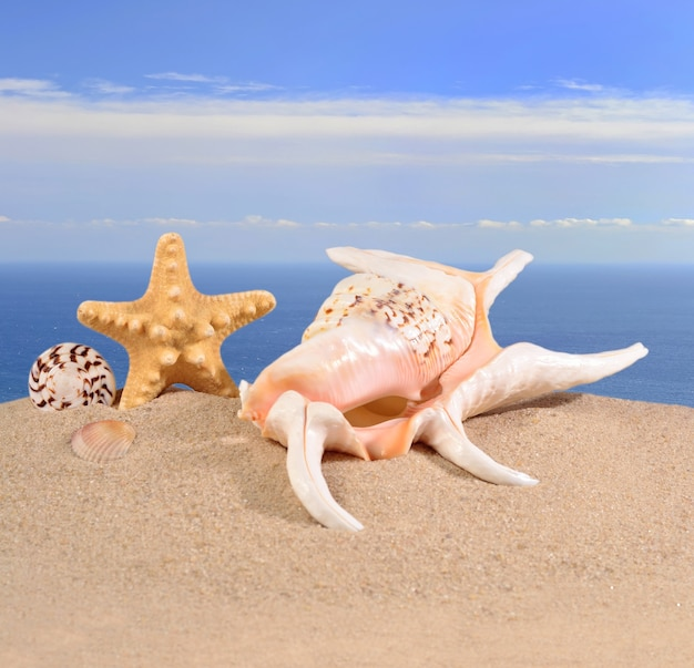 바다 배경 해변 모래에 조개와 불가사리