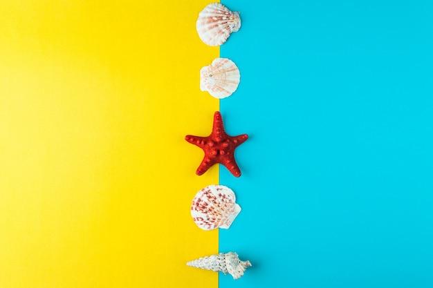 貝殻とヒトデが一列に並んでいます