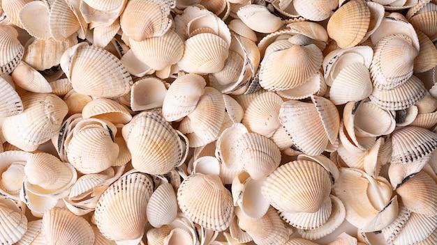 高解像度の貝殻の背景