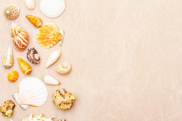 Seashells background, summer holidays concept