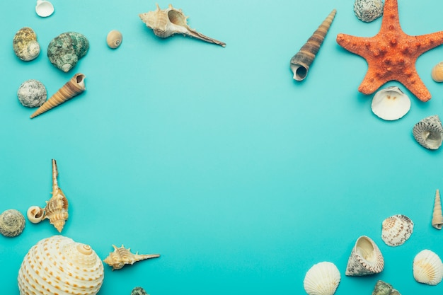 Seashells on a blue background. rest, relaxation, sea, ocean, summer concept.
