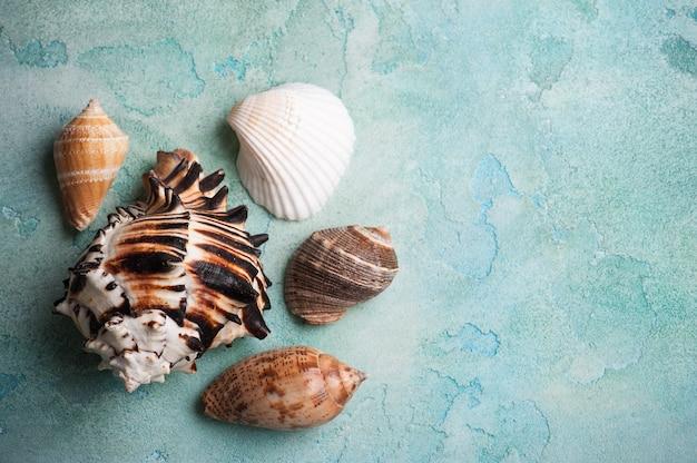 Seashells on blue concrete background