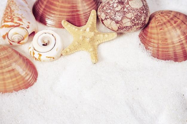 Seashells border on white fine sand. summer background.