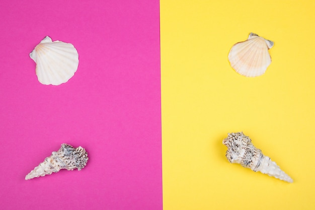 Seashells on bright pink and yellow
