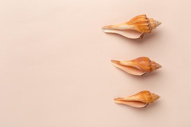 Seashells on a bright