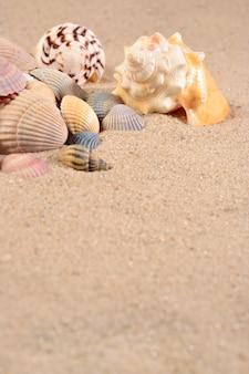 모래 배경에 조개 클로즈업