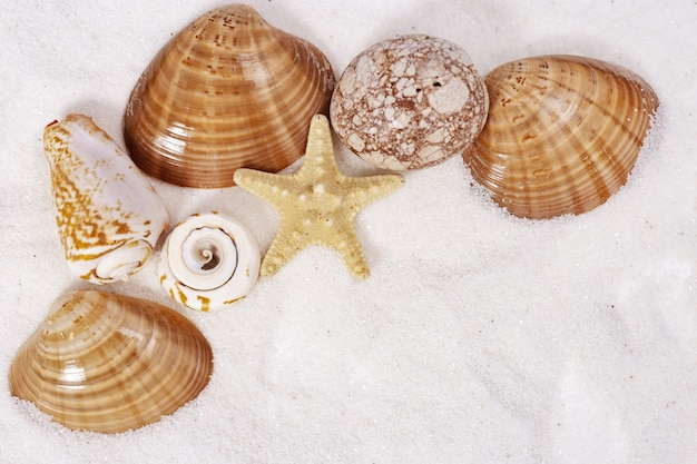 Seashells and colored stones on sand
