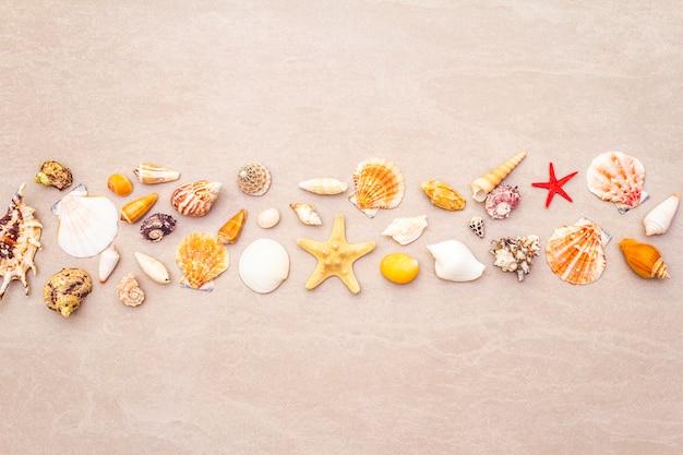 Seashells composition, summer holidays concept