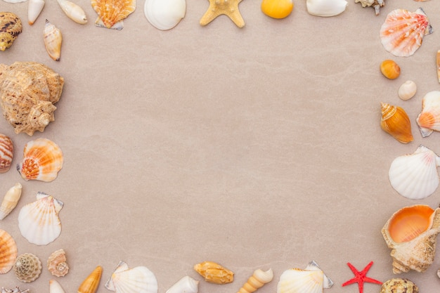 Seashells frame background, summer holidays concept