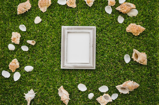 Seashells and frame on green grass background