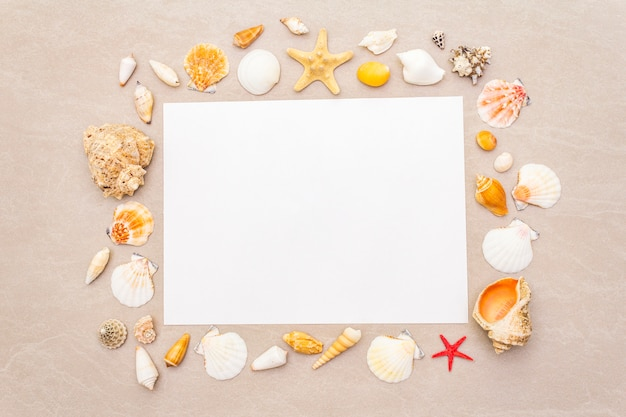 Seashells frame and white blank paper sheet background. card, note, document, top view