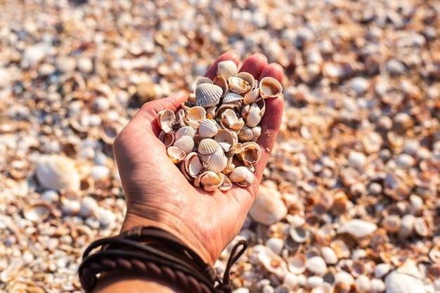 Ракушки в женской ладони на фоне пляжа.