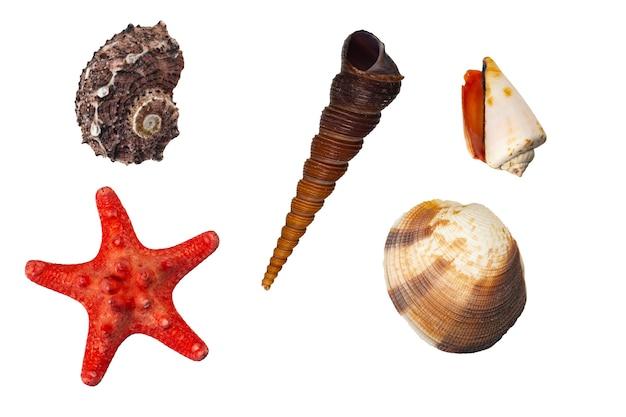 白い背景で隔離の貝殻