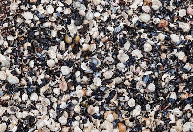 Seashells natural background