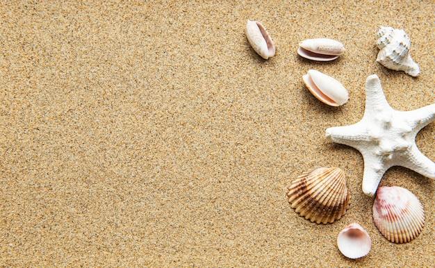 모래에 조개. 바다 여름 휴가 배경. 평면도