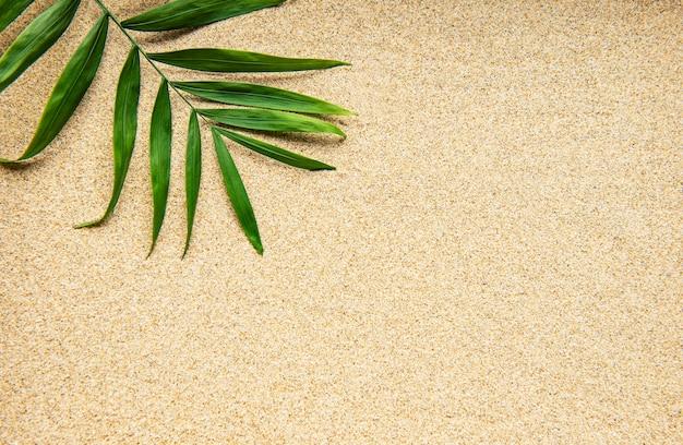 砂の上の貝殻。海の夏休みの背景。上面図