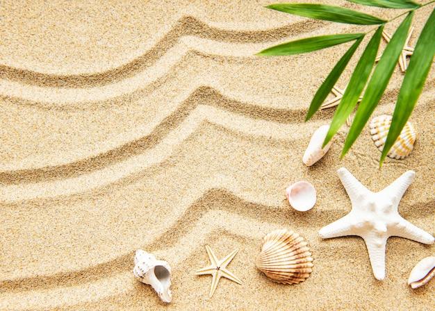 모래에 조개. 텍스트에 대 한 공간을 가진 바다 여름 휴가 배경. 평면도