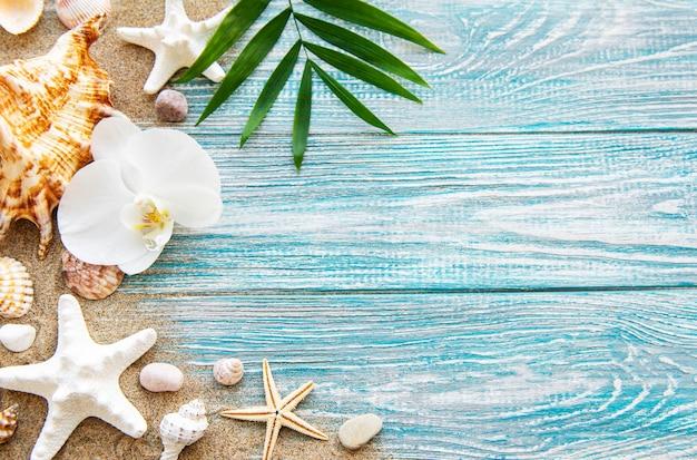 모래에 조개. 텍스트에 대 한 공간을 가진 바다 여름 휴가 벽. 평면도