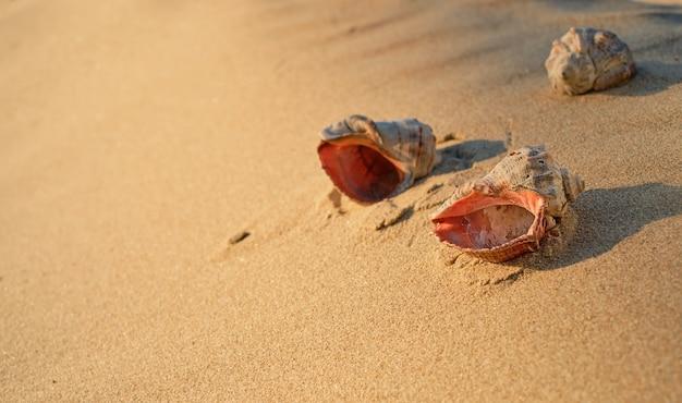背景のクローズアップとして砂の上の貝殻