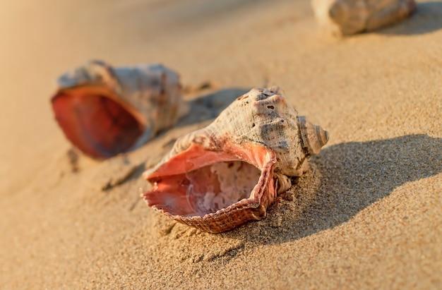 砂の上の貝殻、クローズアップ、セレクティブフォーカス、日没時の太陽による自然光