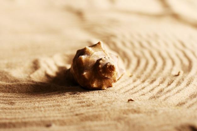 모래에 조개
