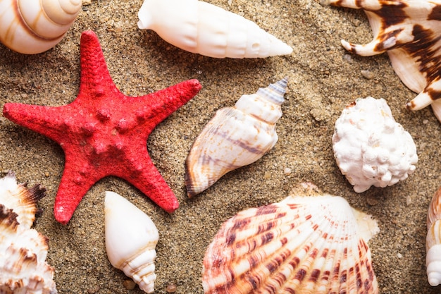 모래 위의 조개