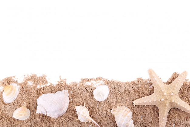 Seashells on pile of sand isolated over white, frame