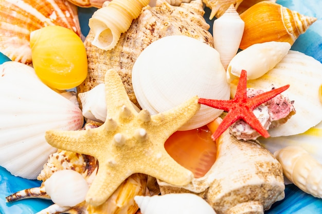 Seashells on plate, top view, summer concept