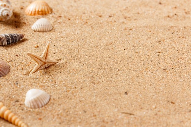 Seashells on sand beach. close up and copy space.