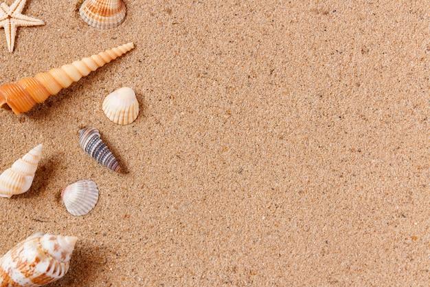 Seashells on sand beach.