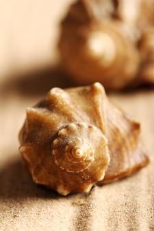 Seashells on the sand