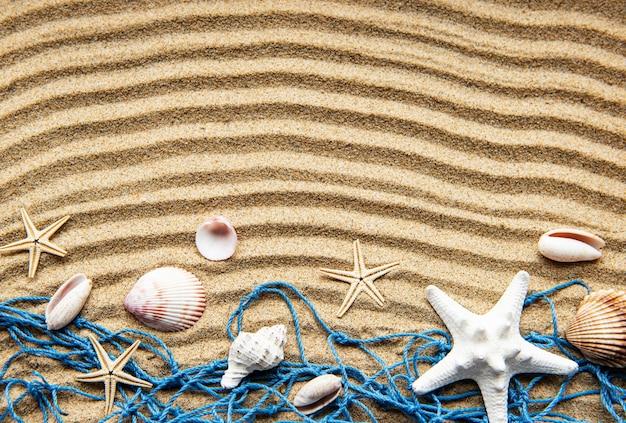 Seashells on sand