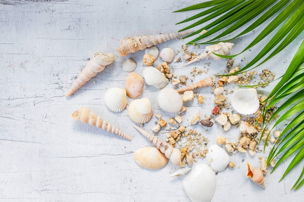 Seashells and sea concept
