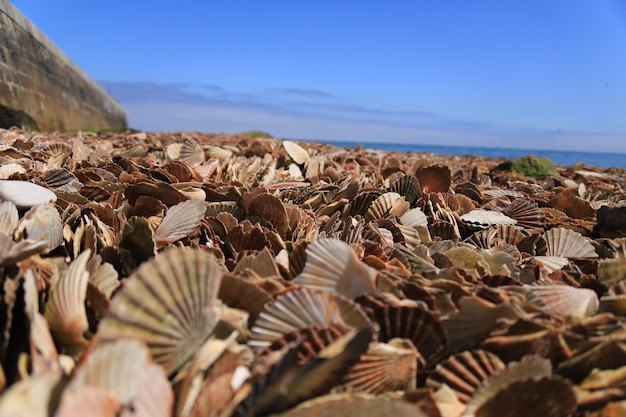 Seashells on the shore of a sea on a sunny day