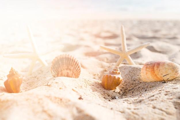 Seashells and starfish arranged on sand at beach