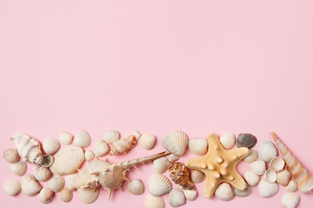Seashells and starfish on a pale pink background