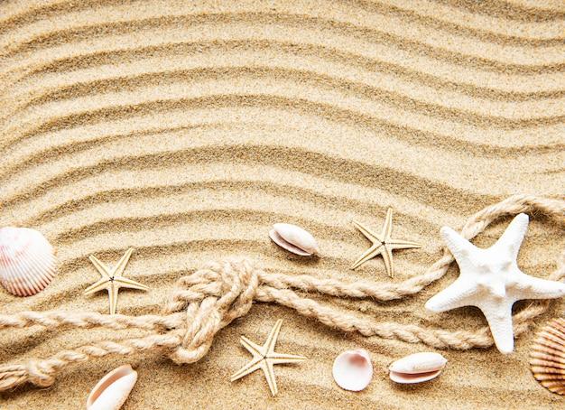 貝殻、ヒトデ、砂の上のロープ