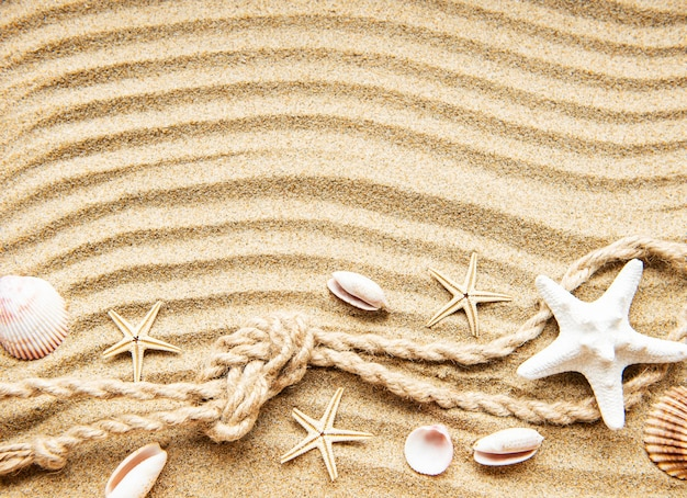 Seashells, starfishes and rope on sand