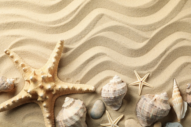Seashells and starfishes on wavy sea sand surface