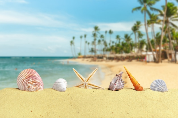 Seashells and stars on clear beach sand with accessories
