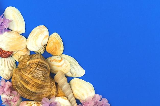 貝殻の夏のデザインの背景、夏休みのコンセプト、上面図、フラットレイ写真