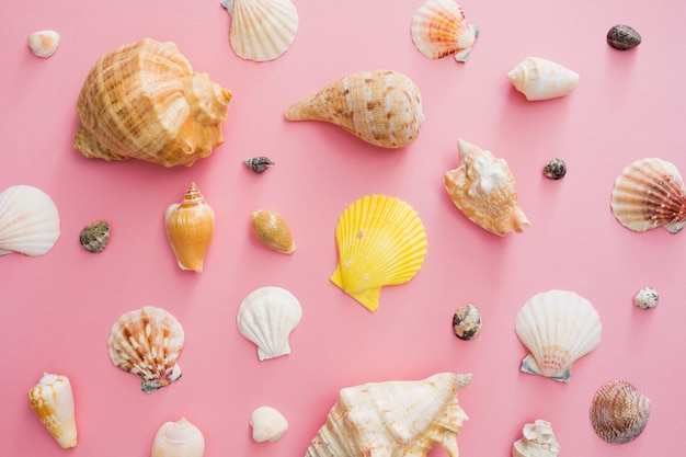 Seashells symbol of summer holiday on the beach on a pink background.
