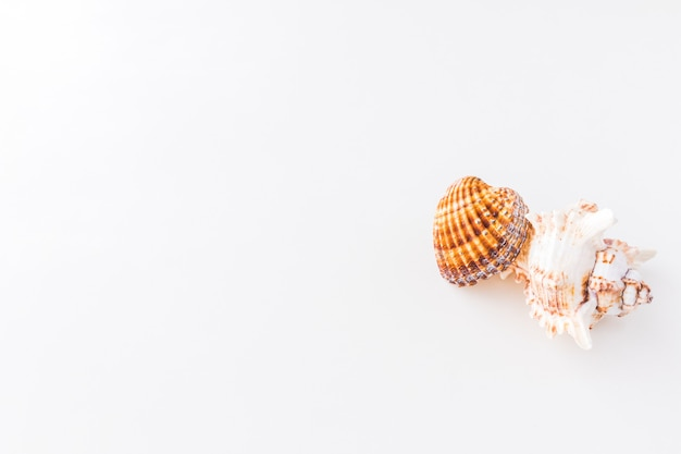 Seashells. top view with copy space.