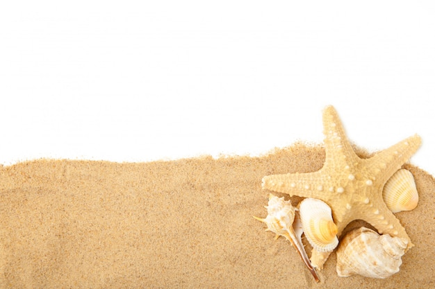 Seashells with sand isolated on white with copy space. summer concept