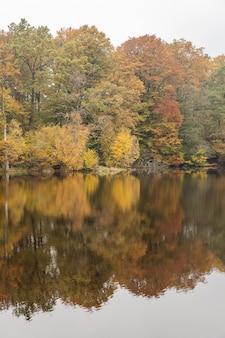 해변과 물 속에서 가을 색깔의 숲에서 반사, 북부 스웨덴에서 그림.