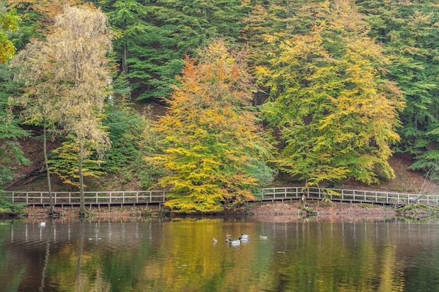 Seashore and reflections from the autumn colored forest in the water
